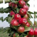Пристрой. Саженцы плодовых, ягодных и декоративных. Оплати и 5.06 забери