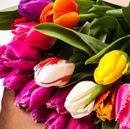 Живые тюльпаны к 8 марта.