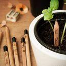 Растущие карандаши и растущая травка - творим дома красоту!