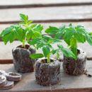 Торфяные таблетки Jiffy,кокосовый субстрат,горшки по ценам прошлого года.
