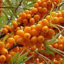 Пристрой. Саженцы плодовых, ягодных и декоративных. Оплати и 25.09 забери