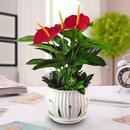 Комнатные растения - живая красота в доме