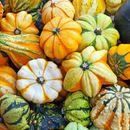 Агроника: плазменные семена - овощи и цветы: Разбираем остатки.