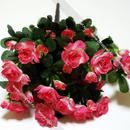 В наличи! Искусств. цветы из пластика и не только от Альфацвет