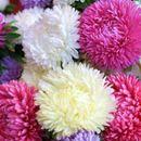 Сибирский садовод №8.Цветы -семена однолетников и многолетников.