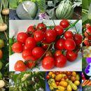 Сибирский садовод-Семена овощных культур, пряные и лекарственные травы!