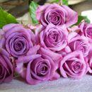 Розы с питомника Тамбова-4