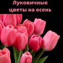 Лилии, тюльпаны, нарциссы, крокусы и другие луковичные для осени 2021