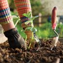 Незаменимые помощники и в саду и в огороде!-10
