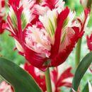 Шикарные тюльпаны - яркая весна 9. Собираем быстро!