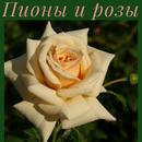 Саженцы роз и пионов по низким ценам. Забирай и сажай.