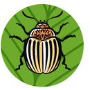Средство от колорадского жука - уже скоро пригодится! Удобрения для хвойников.