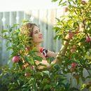 Яблони, груши, сливы и др. Взрослые саженцы плодовых и декоративных растений!