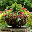 Семена цветов для красивого сада - Уральский дачник
