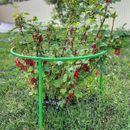 Поможем саду! Кустодержатели, колышки и подвязки