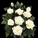 Искусственные цветы отличного качества по низким ценам! -2/2020