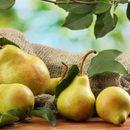 Висит груша - нужно кушать-7! Отличные саженцы готовые к урожаю.