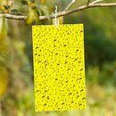 Жёлтая клейкая ловушка для ловли вредных насекомых.3